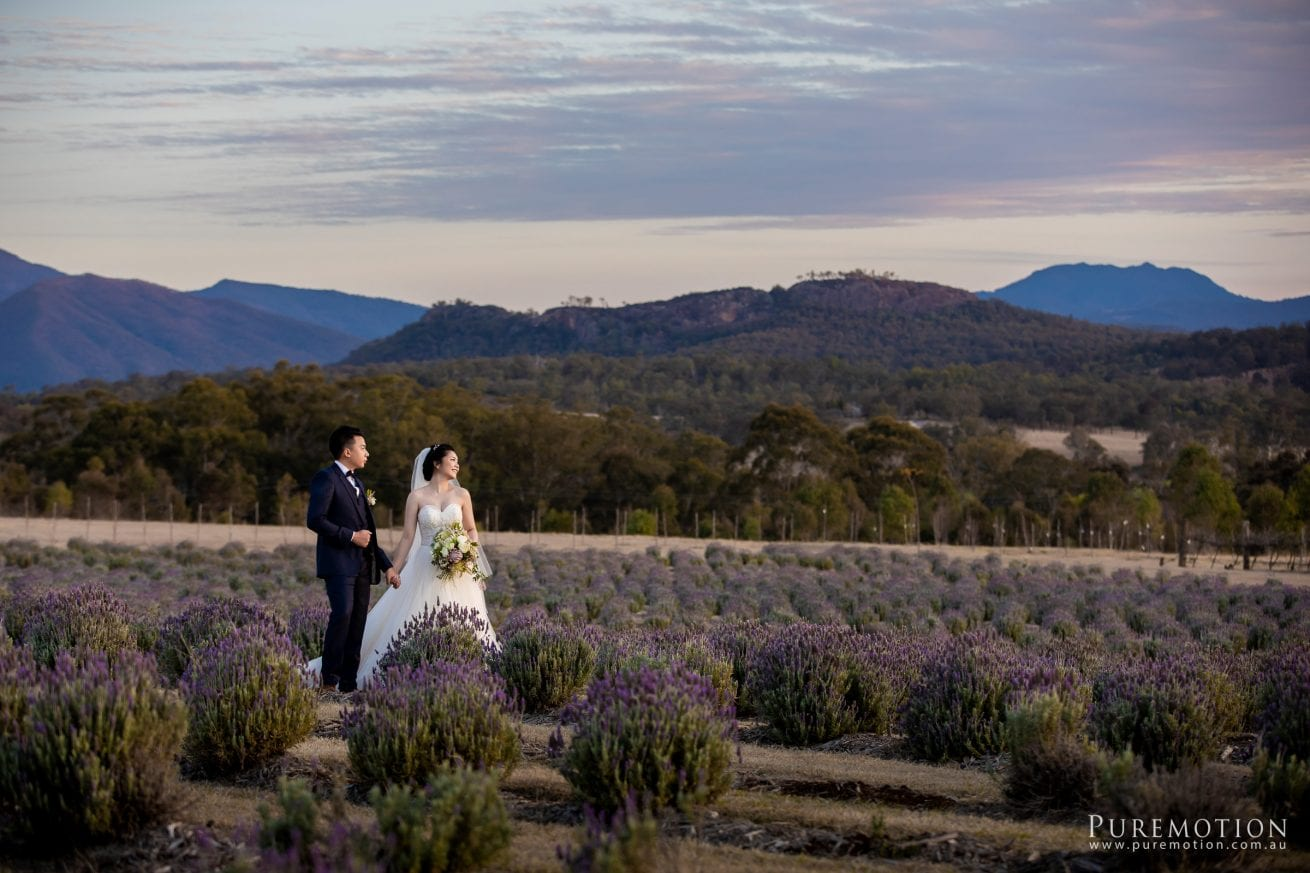 180830 Puremotion Wedding Photography Kooroomba Lavender Alex Huang NoraOscar-0084