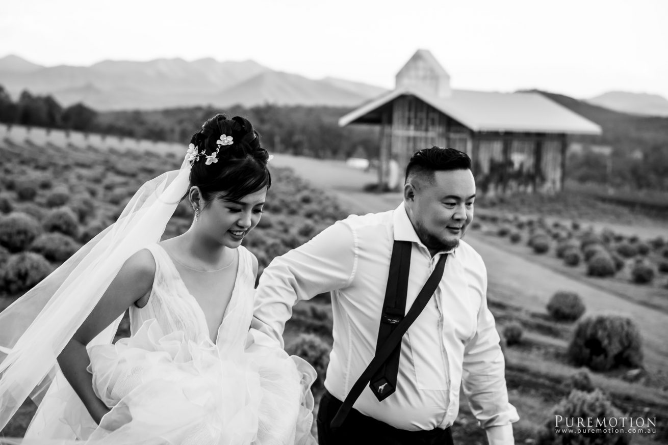 190323 Puremotion Wedding Photography Kooroomba Lavender Alex Huang ArielRico_Edited-0076
