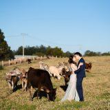 190901 Puremotion Pre-Wedding Photography Brisbane Alex Huang EllieBruno_Edited-0065
